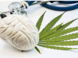 "San Francisco AIDS Foundation Article, ""For people with HIV, cannabis use linked to lower rates of cognitive impairment"" Features JDP Student Caitlin Wei-Ming Watson"