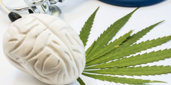 """San Francisco AIDS Foundation Article, """"For people with HIV, cannabis use linked to lower rates of cognitive impairment"""" Features JDP Student Caitlin Wei-Ming Watson"""